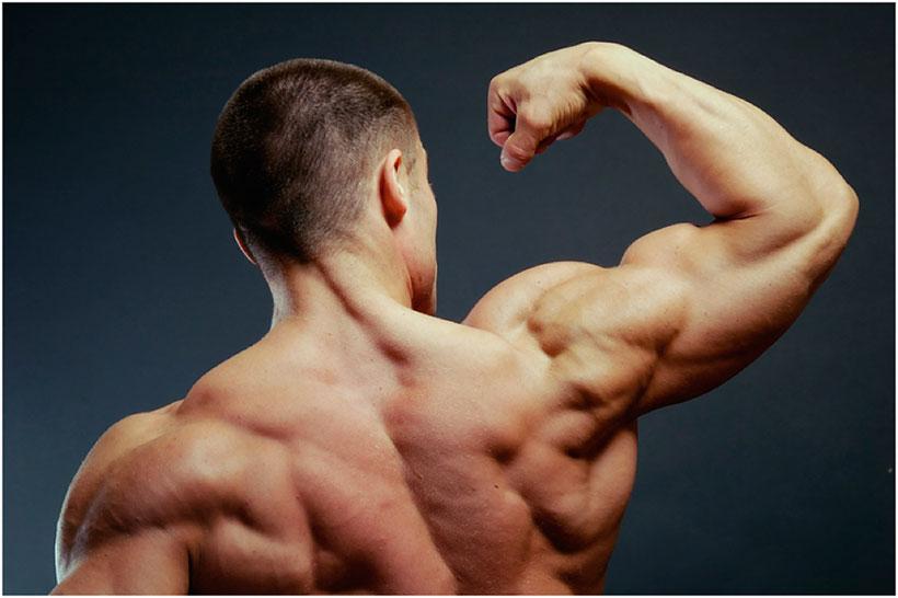 десять уникальных факторах о мышцах
