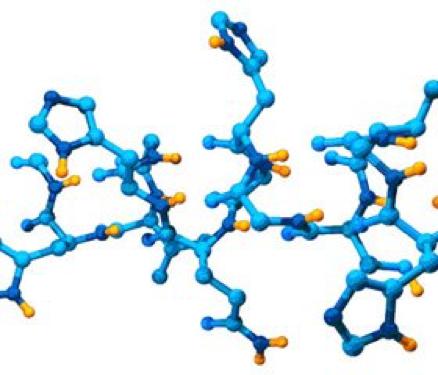 Виды пептидов